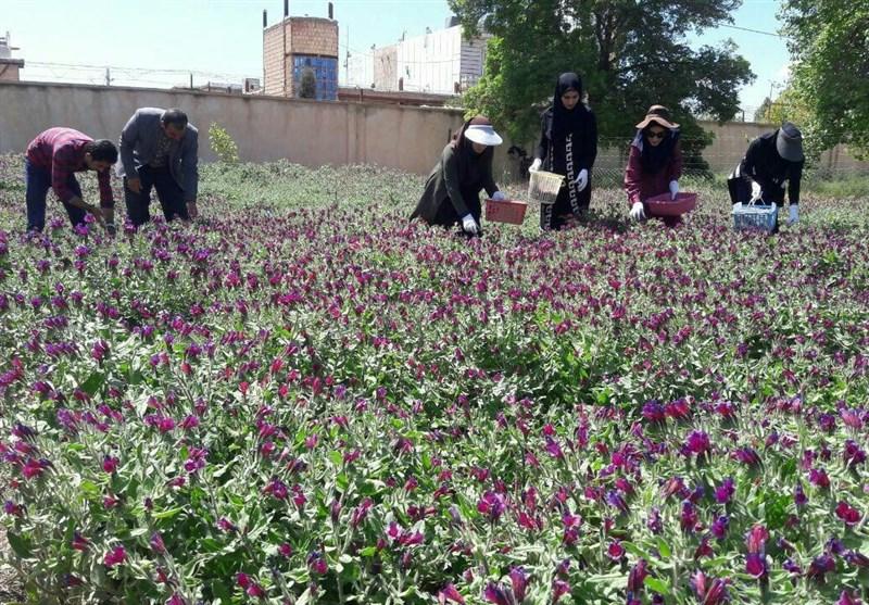 ۲۹هزار تن محصولات کشاورزی و دامی لرستان صادر می شود