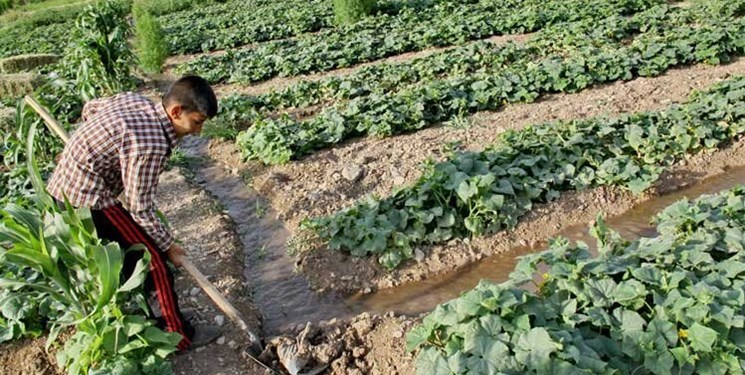 مرگ تدریجی منابع در سایه بیقانونی/ جولان کشاورزان مهاجر در اراضی کشاورزی لرستان