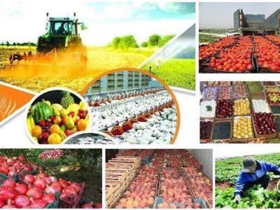 ۲.۹ میلیون تُن محصول کشاورزی در لرستان تولید میشود