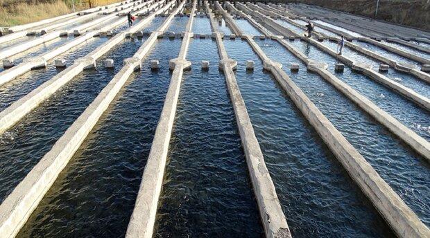 لرستان قطب تولید ماهیان خاویار میشود/تولید ۳۰ هزار تن انواع آبزی