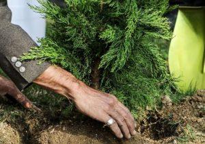 آغاز عملیات جنگل کاری در ۵۵۰۰ هکتار از اراضی لرستان