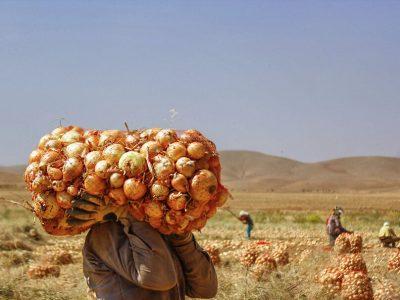 بازارچههای عرضه مستقیم محصولات کشاورزی در لرستان راهاندازی میشود