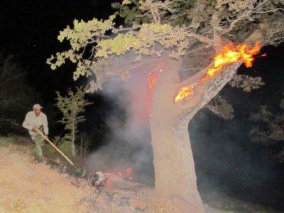 درخت گردوی ۸۰۰ ساله سلسله در آتش سوخت