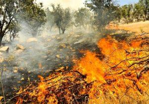 به نام خشکسالی به کام سودجویان/حرص مالکان، آتش دامنگیر مراتع و جنگل های لرستان