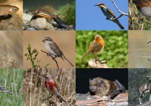 قرار گرفتن بیش از ۲۵ درصد تنوع زیستی گونههای جانوری کشور در لرستان