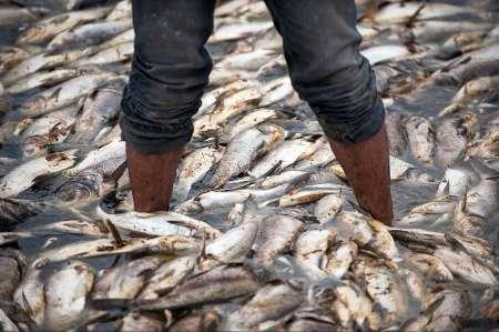 کشتار انبوه ماهیان رودخانه تیره دورود+فیلم