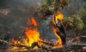206334   به نام خشکسالی به کام سودجویان/حرص مالکان، آتش دامنگیر مراتع و جنگل های لرستان   امید لرستان