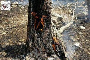 oke 2 6   به نام خشکسالی به کام سودجویان/حرص مالکان، آتش دامنگیر مراتع و جنگل های لرستان   امید لرستان