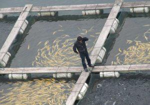 غرق شدن تولید کنندگان بخش آبزی پروری لرستان در گرداب خشکسالی/ خسارت ۲۴۰ میلیارد تومانی به قطب تولید ماهی قزل آلای رنگین کمان؛۹۸ استخر پرورش ماهی شهرستان سلسله تعطیل شد