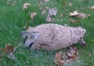 استمرار تجارت پرندگان در لرستان/ متخلفان در دلفان دستگیر شدند